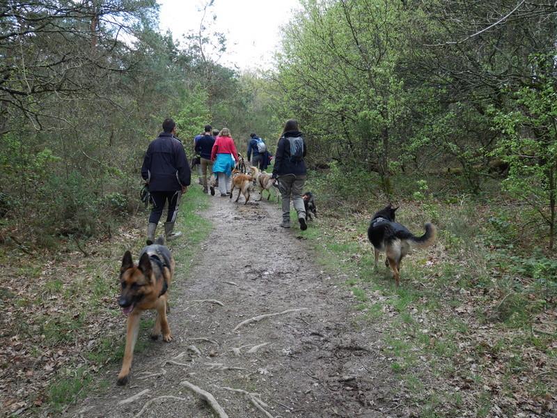 Education du chien de compagnie.fr 111