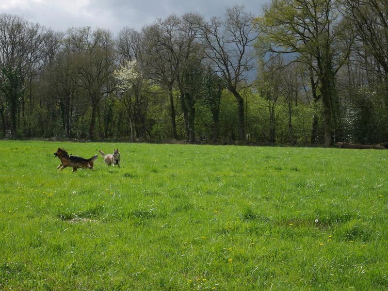 Education du chien de compagnie.fr 311