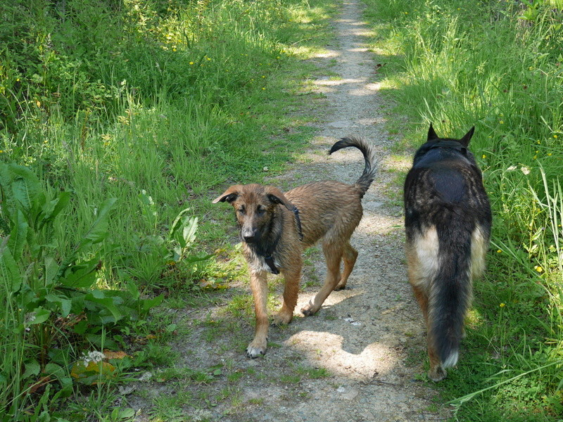 Education du chien de compagnie.fr - Page 2 412