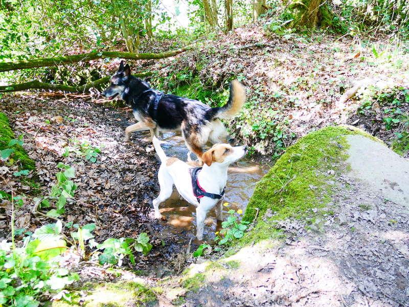 Education du chien de compagnie.fr - Page 2 P1010952