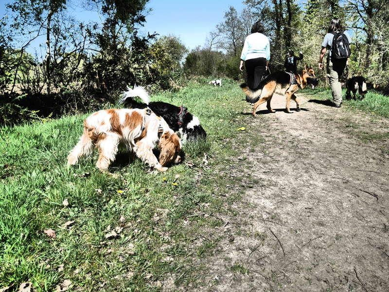 Education du chien de compagnie.fr - Page 2 P1010953