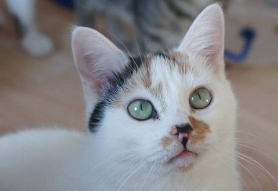 Katzen Melody und Simba haben ein liebes Zuhause gefunden Melody11