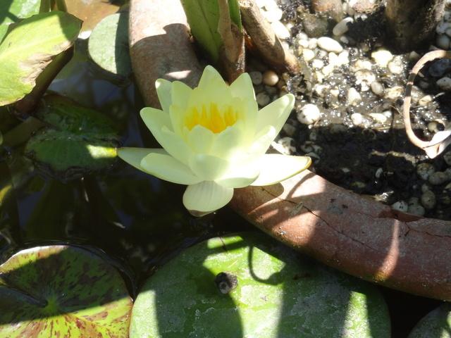 ces quelques fleurs de nos jardins - Page 3 Dsc09111