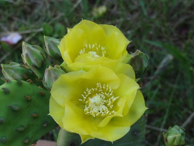 ces quelques fleurs de nos jardins - Page 3 Dsc09113