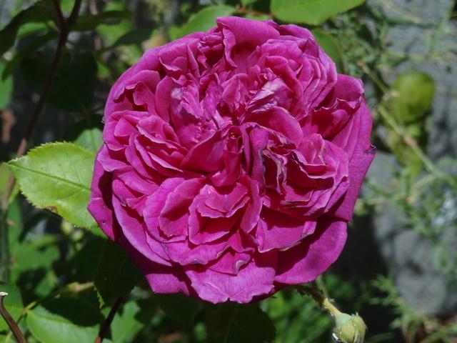 ces quelques fleurs de nos jardins - Page 3 Dsc09115