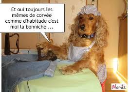 Rasso Gironde 3,4,5 juin 2017 bla bla bla - Page 6 Images13