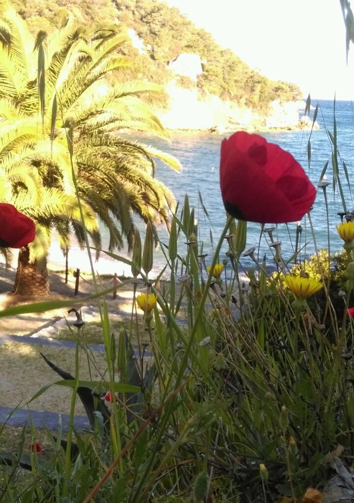 Retour de Grèce  Img-2012
