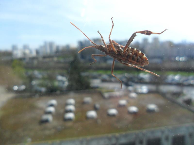 Photos d insectes Sam_8920
