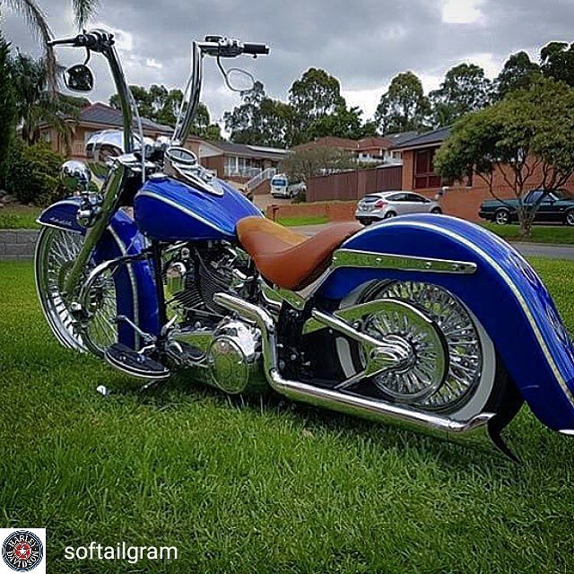 Softail custom Tumbl446