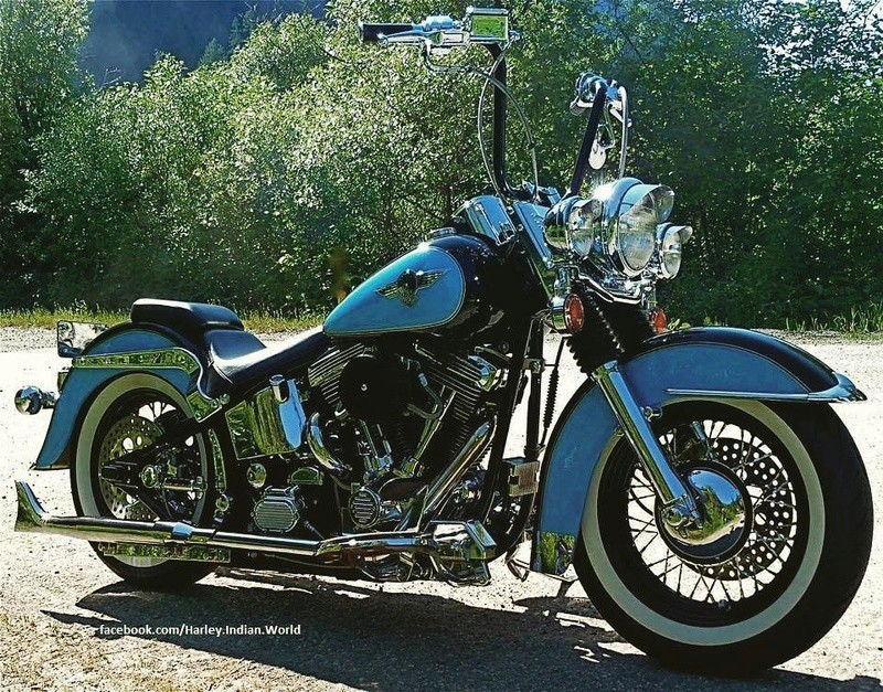 Softail custom Tumbl495
