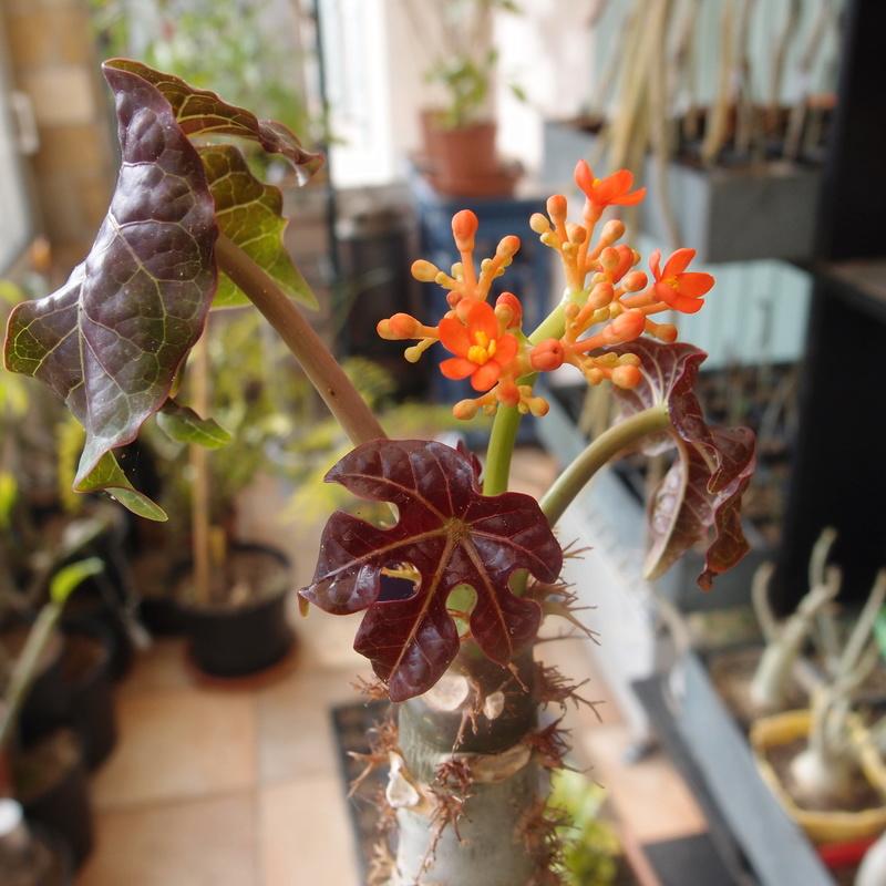 Floraisons de février - Page 14 P2141610