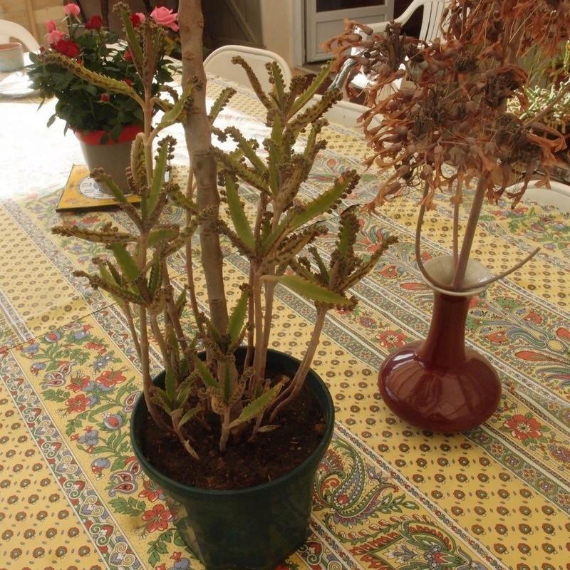 on voit la tige florale coupée, et au pieds, les plantules qui se sont  naturellement ressemées  je me suis contenté d\u0027éclaircir