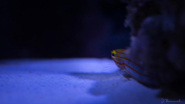 Nano 54l Aquari14
