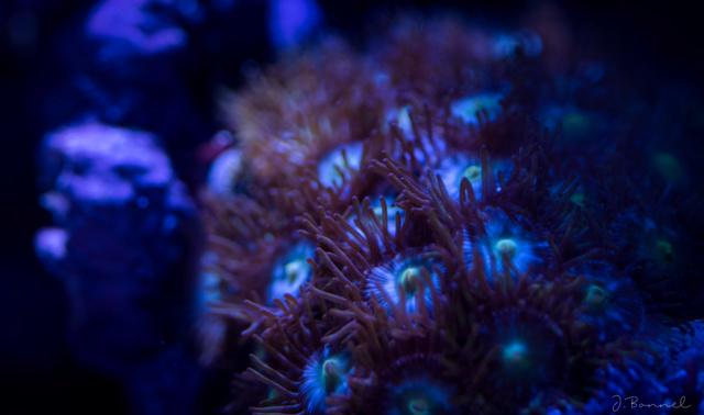 Nano 54L Aquari23