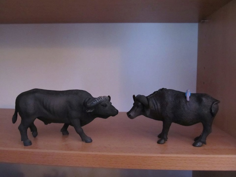 My new Terra Battat Bison and African buffalo. 16681510