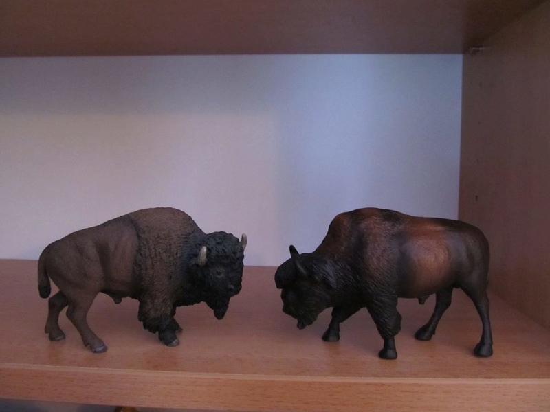 My new Terra Battat Bison and African buffalo. 16831910