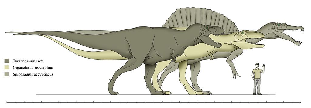 Tyrannosaurus Rex Vs Spinosaurus Compar10