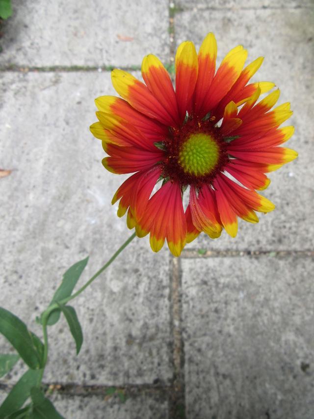 Welcome to my garden: hérissonne enceinte ? Img_0910