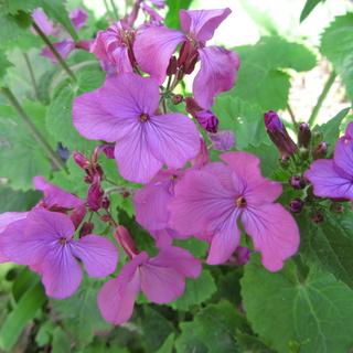 Welcome to my garden: hérissonne enceinte ? Img_2532