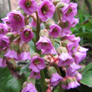 Welcome to my garden: hérissonne enceinte ? Img_2535