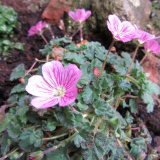 Welcome to my garden: hérissonne enceinte ? Img_2537