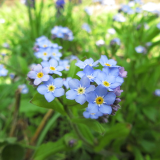 Welcome to my garden: hérissonne enceinte ? Img_2624