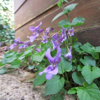 Welcome to my garden: hérissonne enceinte ? Img_2625