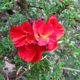 Welcome to my garden: hérissonne enceinte ? Img_2636