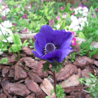 Welcome to my garden: hérissonne enceinte ? Img_2641