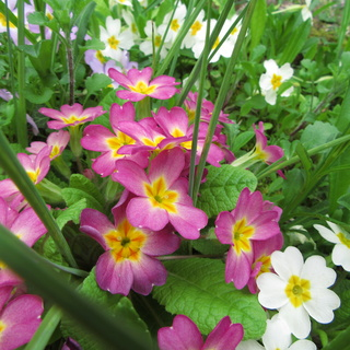Welcome to my garden: hérissonne enceinte ? Img_2643