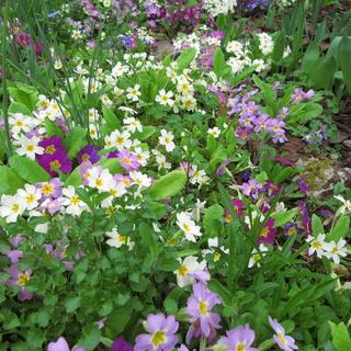 Welcome to my garden: hérissonne enceinte ? Img_2645