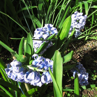 Welcome to my garden: hérissonne enceinte ? Img_2647