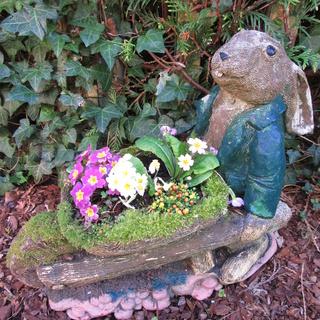 Welcome to my garden: hérissonne enceinte ? Img_2650