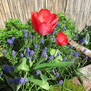 Welcome to my garden: hérissonne enceinte ? Img_2651
