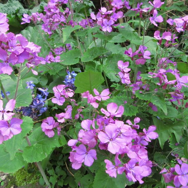 Welcome to my garden: hérissonne enceinte ? Img_2657