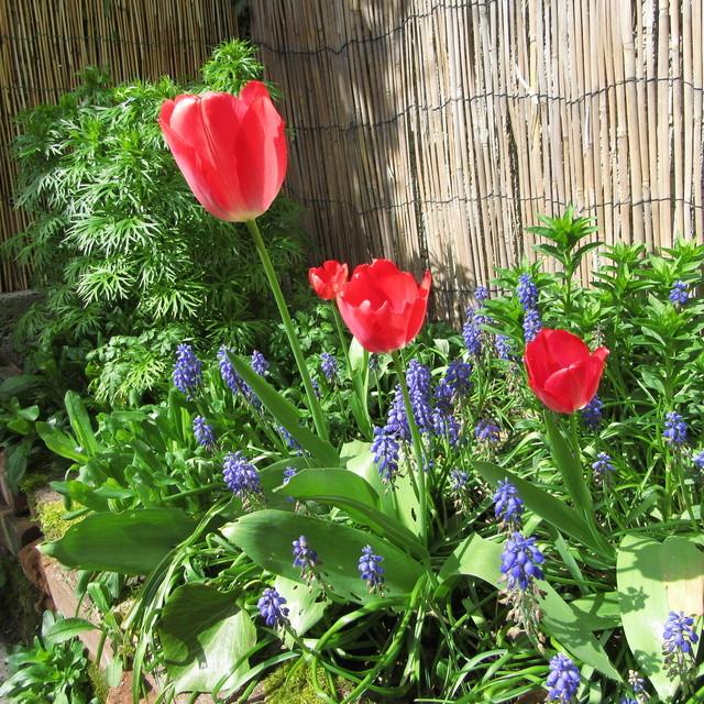 Welcome to my garden: hérissonne enceinte ? Img_2659