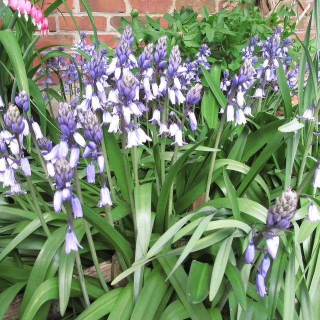 Welcome to my garden: hérissonne enceinte ? Img_2724