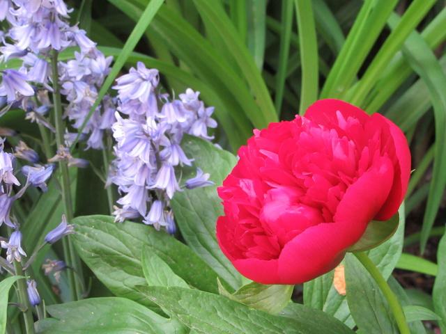 Welcome to my garden: hérissonne enceinte ? Img_2817