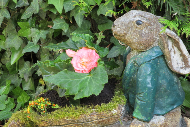 Welcome to my garden: hérissonne enceinte ? Img_2923