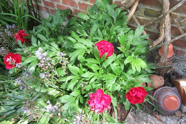 Welcome to my garden: hérissonne enceinte ? Img_2925