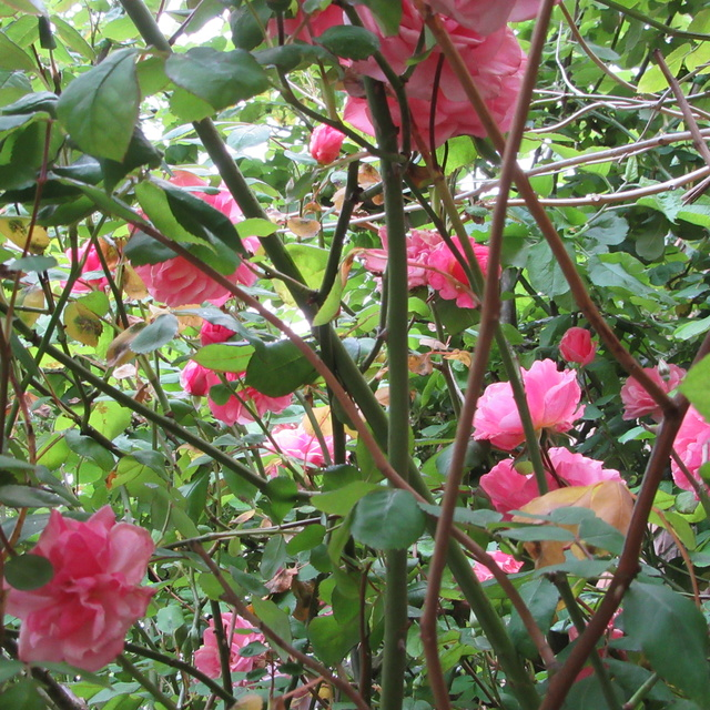 Welcome to my garden: hérissonne enceinte ? Img_2926