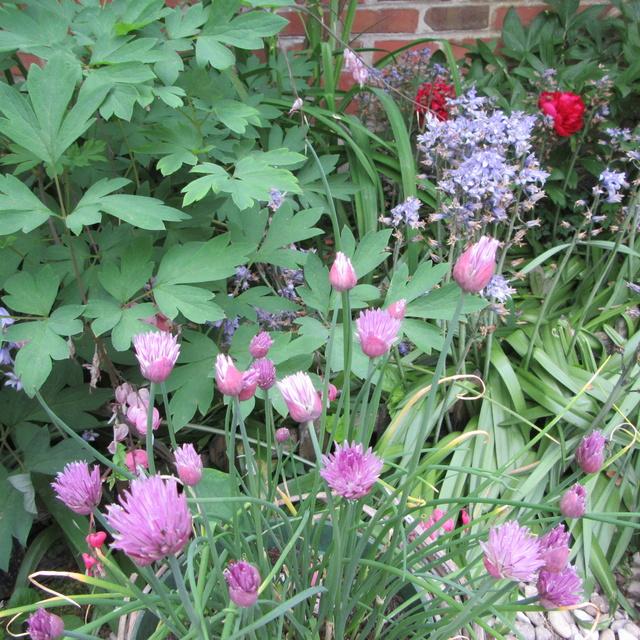 Welcome to my garden: hérissonne enceinte ? Img_2928