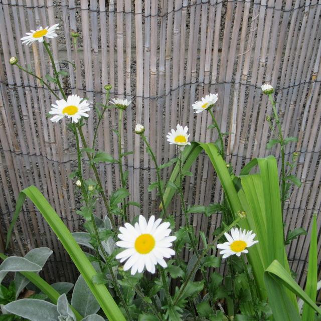 Welcome to my garden: hérissonne enceinte ? Img_2930