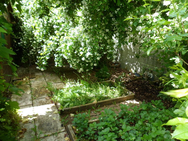 Welcome to my garden: hérissonne enceinte ? Mai_2010