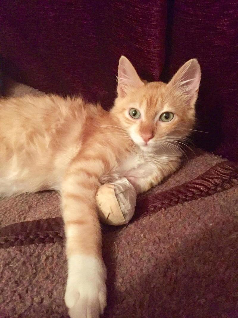 Chat sauvé d'Alger et à adopter à Paris Receiv10