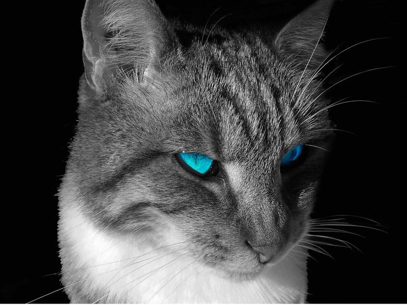 [zafira a  2.2dti] de chat noir - Page 6 20080610