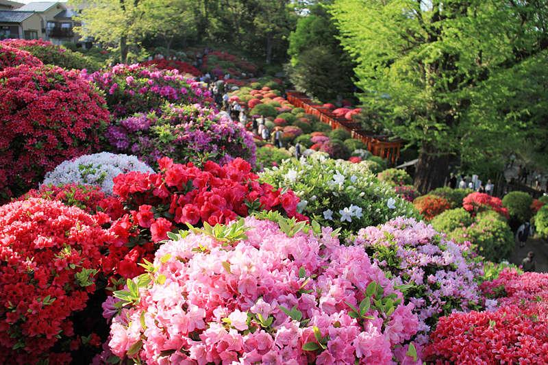 Parkovi i vrtovi - Page 3 45869311