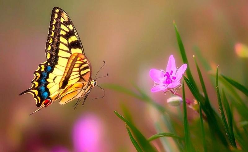 Leptiri i ostali insekti 99px_r28