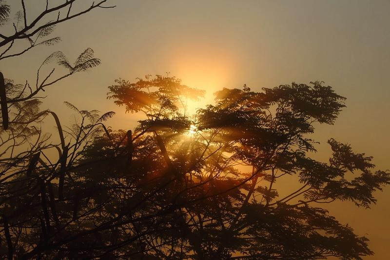 Sunce izlasci i zalasci - Page 25 Tree-110