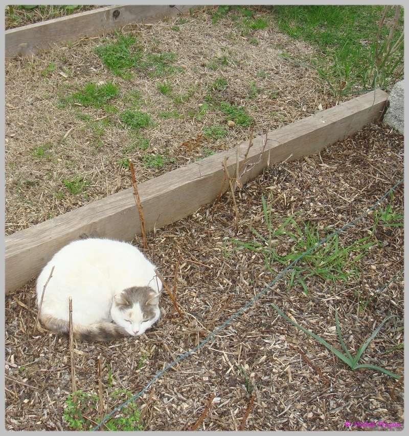 [fil ouvert] Les chats  - Page 3 Dsc01210
